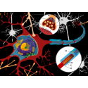 Microbi Giganti NEURONE cellula celebrale