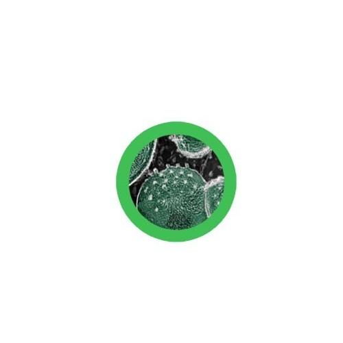 Microbi Giganti CLAMIDIA