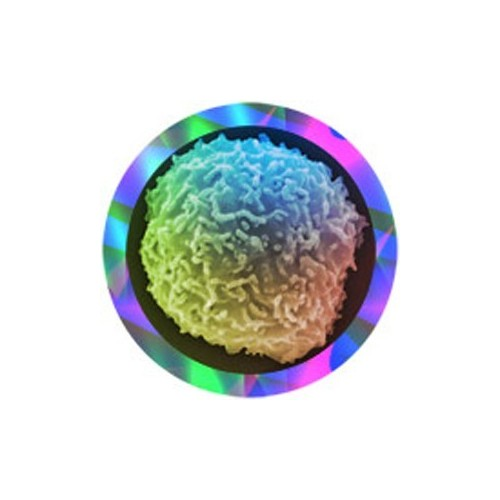 Microbi Giganti CELLULA STAMINALE