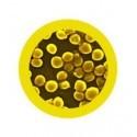 Microbi Giganti STAFILOCOCCO MRSA Meticillino resistente