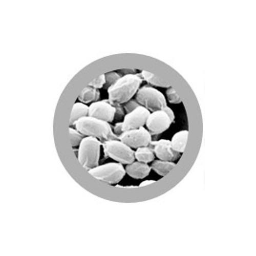 Microbi Giganti ANTRACE