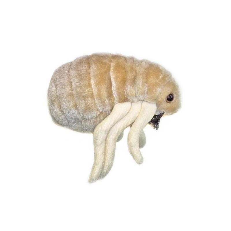 Microbi Giganti PULCE riproduzione ingrandita