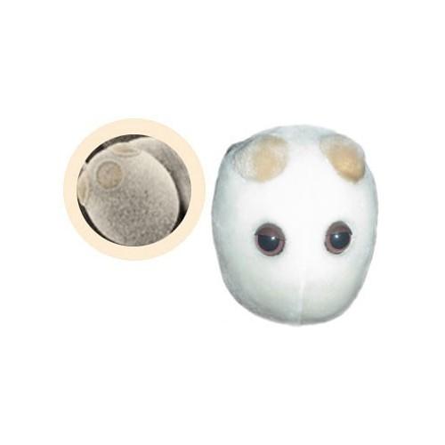 Microbi Super Giganti Lievito
