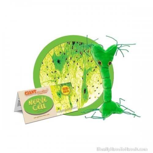 Microbi Giganti Cellula Nervosa