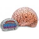 Cervello Gonfiabile Emergenza