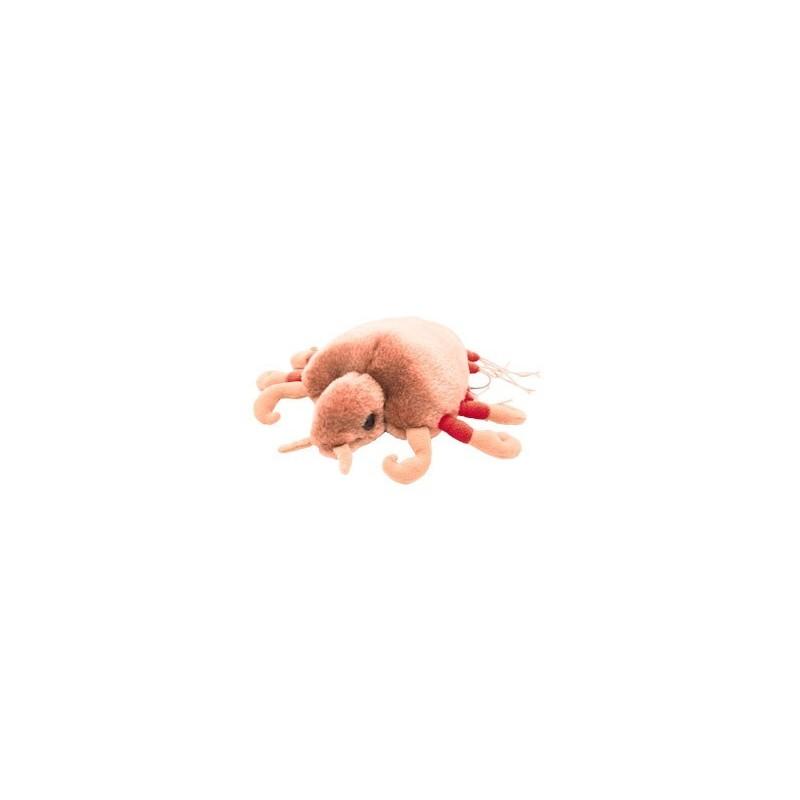 Microbi Giganti Piattola Pidocchio del Pube