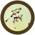 Microbi Giganti Tetano